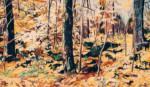 Autumn Woods thumbnail